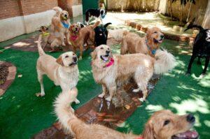 Creche para Cachorro em São Paulo