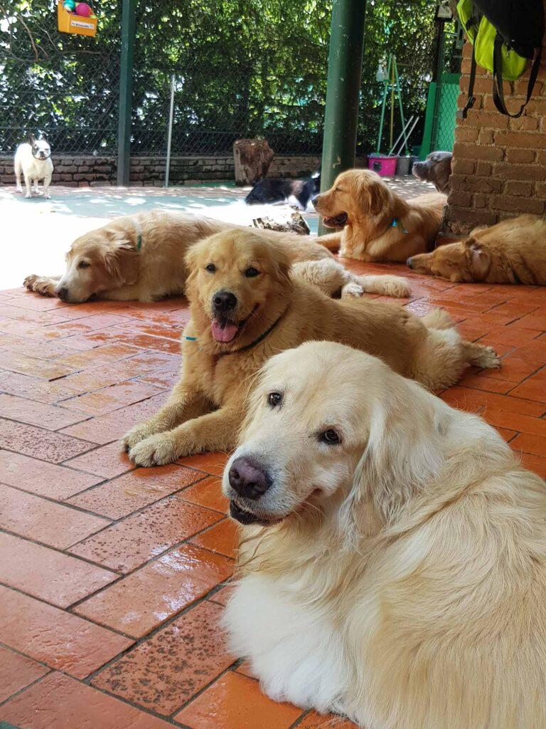 Hotel para cachorros em São Paulo